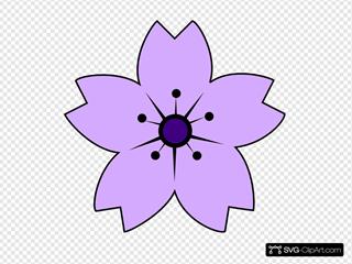 Purple Sakura