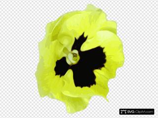 Yellow Pansy