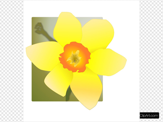 Daffodil With Green Background