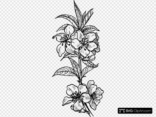 Almond Plant SVG Clipart