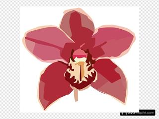 Orchid Copy