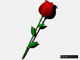 Single Cartoon Rose