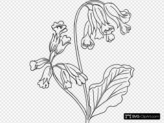 Cowslip Drawing SVG Clipart