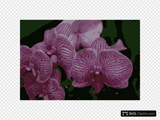 Bunch Of Orchids