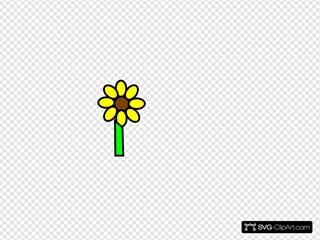 Sunflower With Stem