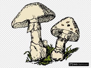 Two Mushrooms