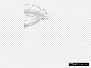 Gray Conch Shell