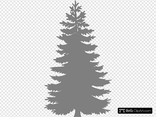 Silhouette Pine