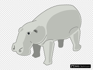 Gray Hippopotamus