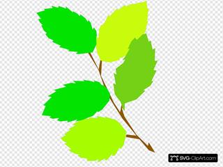 5 Green Leaves