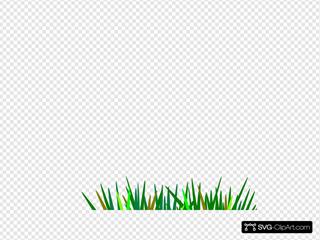Green Wheat Grass Tuft