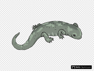 Big Green Salamander