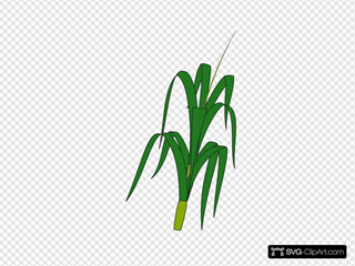 Wheat Plant Food