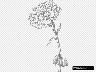 Grey Carnation Clipart