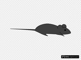 Dark Grey Lab Mouse