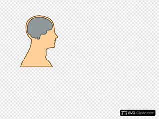 Man Brain Grey