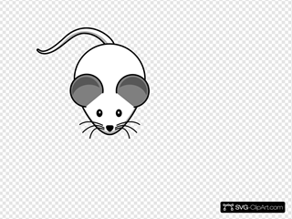 White Mouse Both-grey-ears