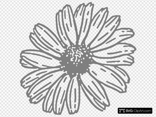 Daisy Program Grey