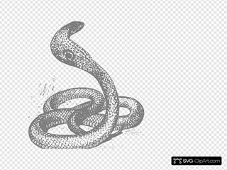 Cobra Snake Grey