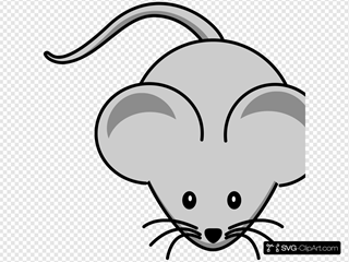 Large Ear  Mouse