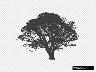 Grey Oak Tree