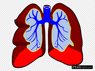 heart and lungs clipart - Clip Art Library