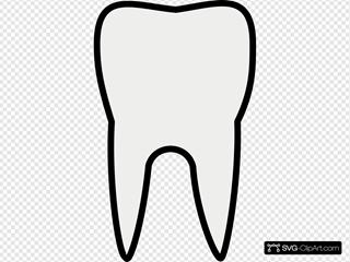 Tooth Molar