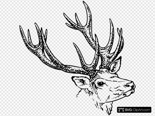 Stag Head