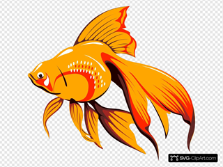 Goldfish With Long Fins