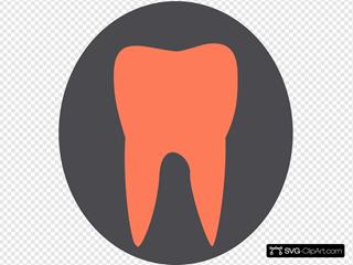 Orange Tooth12