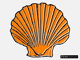Orange Seashell