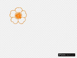 Orange Hisbiscus