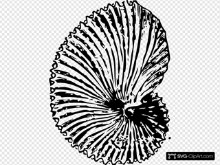 Argonaut Shell