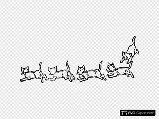 Kitties Playing Running