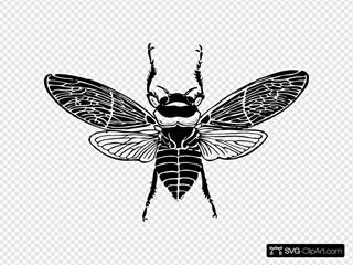 Bee Top View