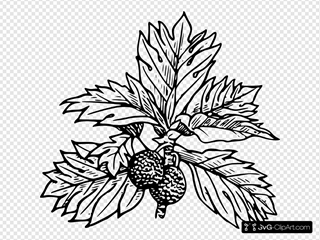 Breadfruit Clipart