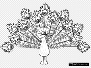 Peacock Lineart