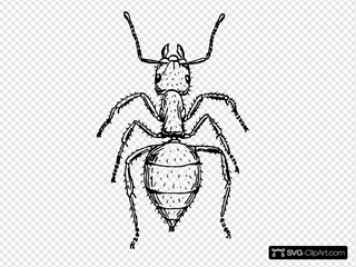 Ant Outline Animal