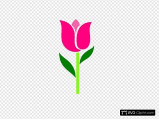 Pink Tulip Leaves Askew