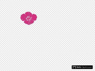Hot Pink Poppy
