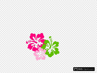 Hibiscus Pink Green Clipart