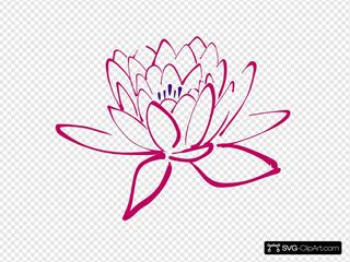 Pinkish Lotus