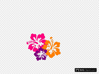 Hibiscus Color Trio