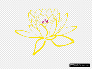 Pink Yellow  Lotus