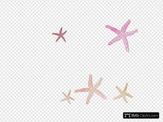Starfish Prints A Bit Darker