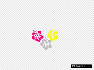 Hibiscus Pink Yellow