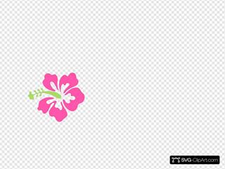Pink Green Hibiscus