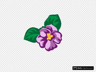African Violet 45