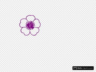 Purple Buttercup Flower