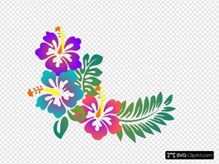 Hibiscus Gradiant